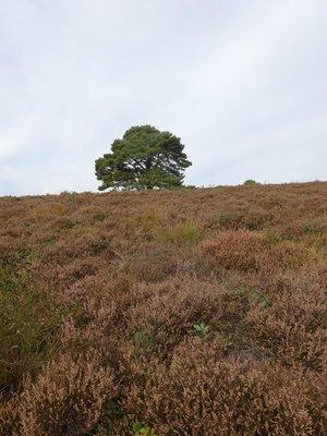 National Park Veluwezoom