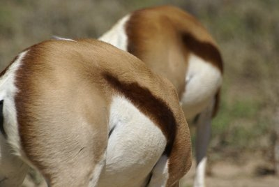 Springbok Patterns