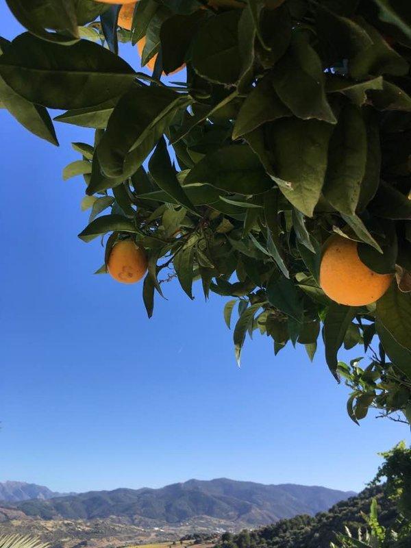 Spanish Oranges