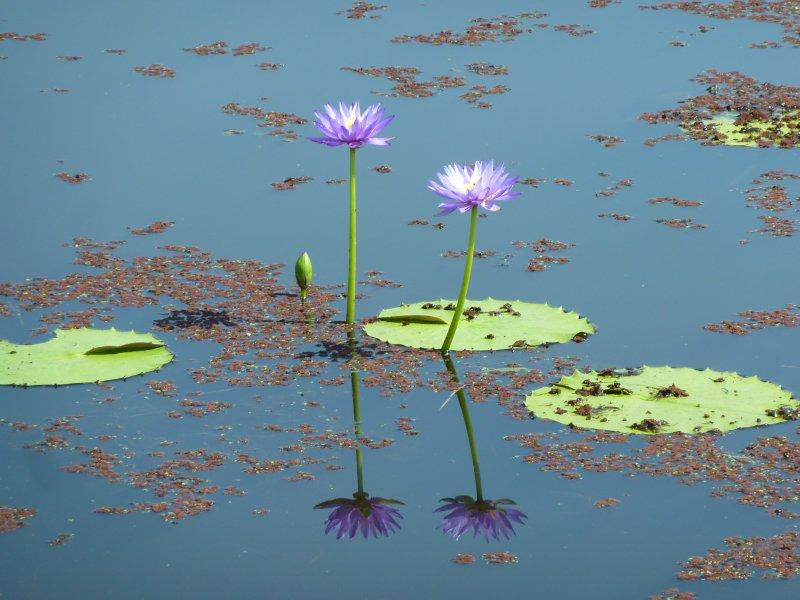 Tyto Wetlands, Ingham
