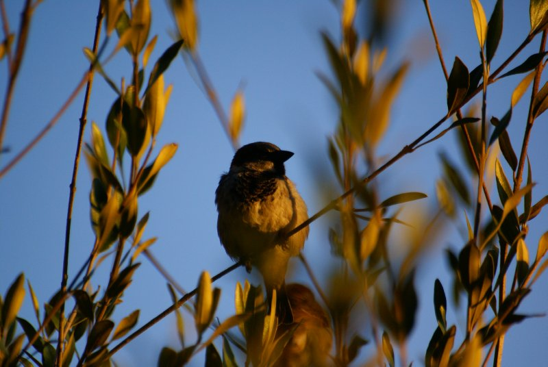 Bird in Coonabarabran, New South Wales