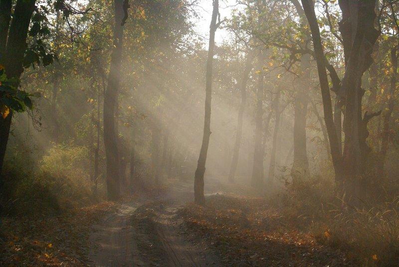 Sun rays, Bandhavgarh National Park