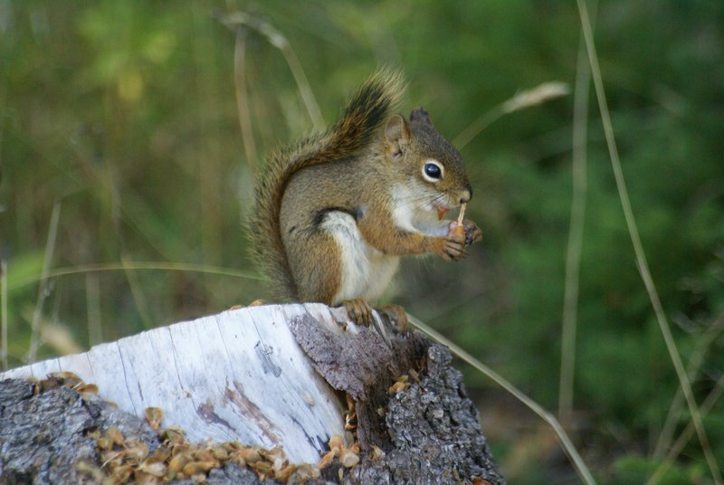 Squirrel, Nova Scotia