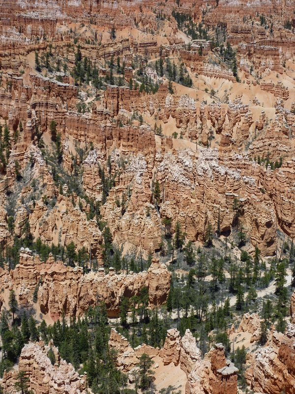 The famous Hoodoos in Bryce Canyon National Park, Utah