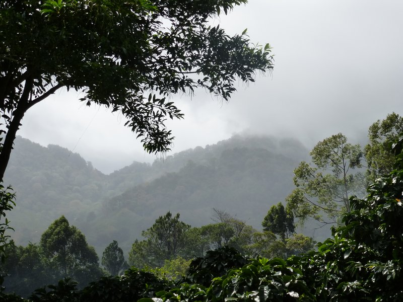 Coffee and Cloud Forest