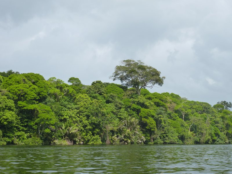 Tortuguero Canal and Rainforest