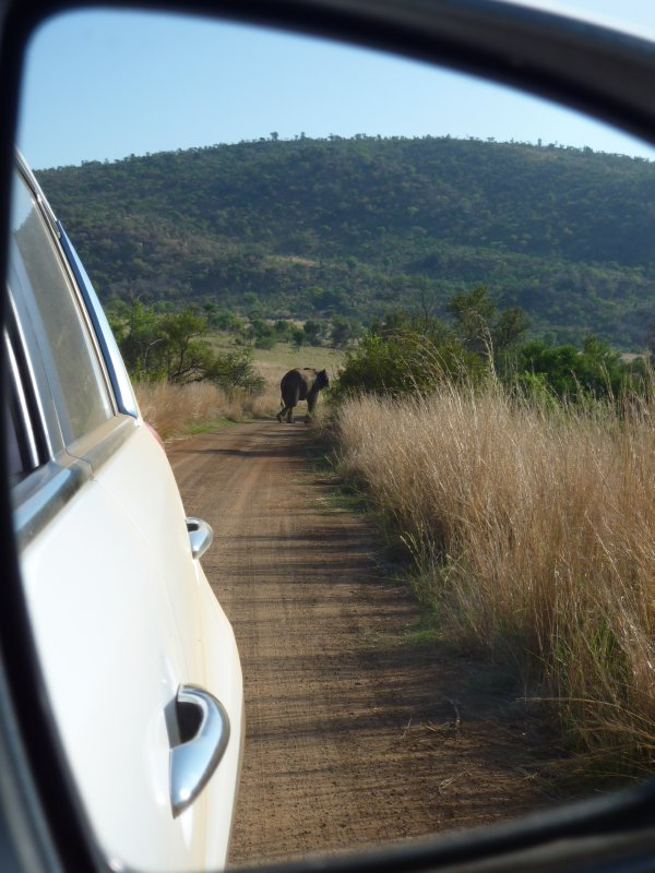 Elephant as seen through car mirror, Pilanesberg