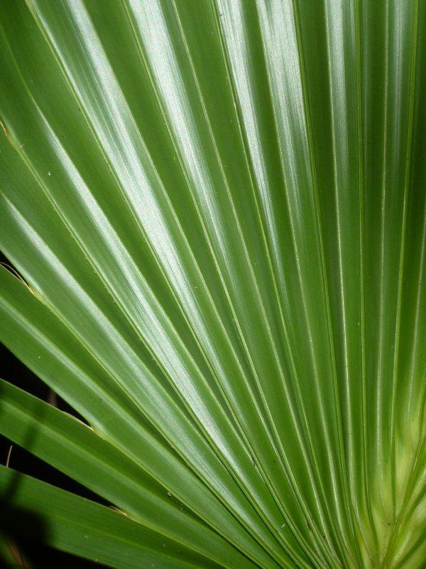 Everglades Leaf