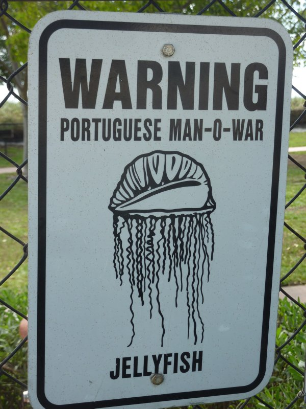 Jellyfish Warning