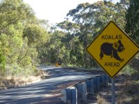 Koala sign, Warrumbungle NP