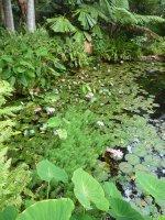 Cooktown Botanical Gardens