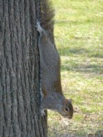 Squirrel at The Mall, D.C.