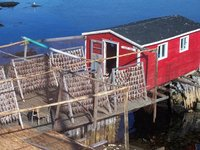 Drying fish, Twilingate, Newfoundland