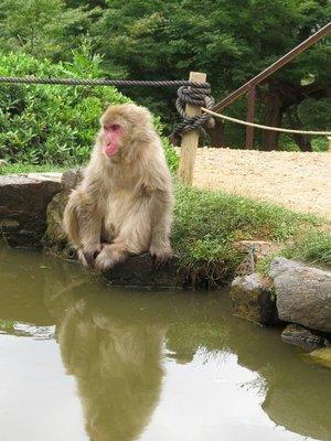 Emo Monkey.