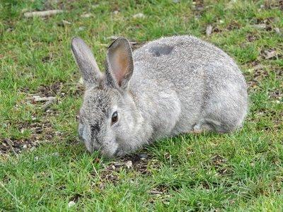 Mr. Bunny!