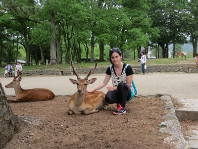 The deer are super friendly in Nara park! There's about 1100 apparently.