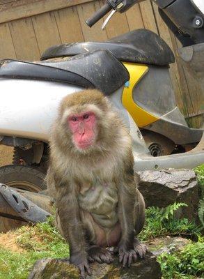 Badass Monkey.
