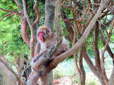 Epic Monkey.