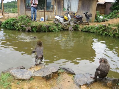 Some young monkeys having fun in the water!