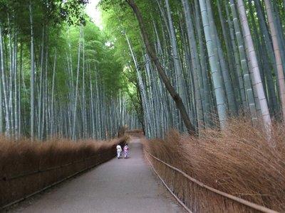 Two girls dressed in a yukata walking through Bamboo Grove.