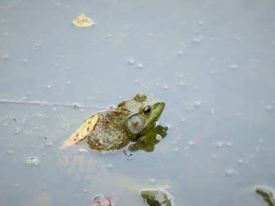 Mr. Frog! I think this is the best picture I took all day...