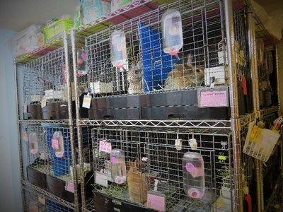 Bunnies at the rabbit café.
