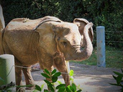 Mr. Elephant!