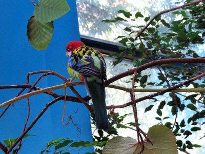 Pretty Parrot.