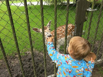 Our deer neighbours