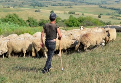 Romanian shepherd in the mountains