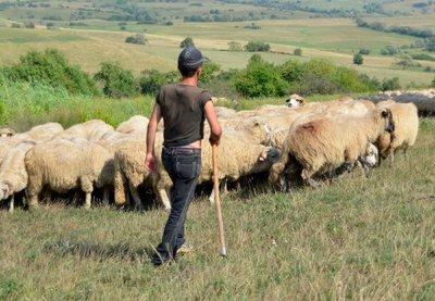 Romanian shepherd in the mountains