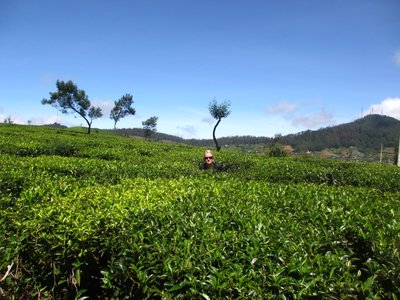 Olga in a tea plantation