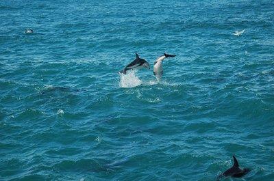 dolphinWOrca (58)