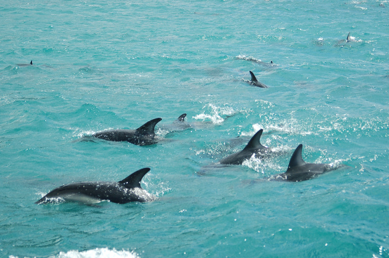 large_dolphinWOrca__43_.jpg