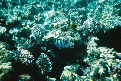 Red Sea, Ras Mohammed