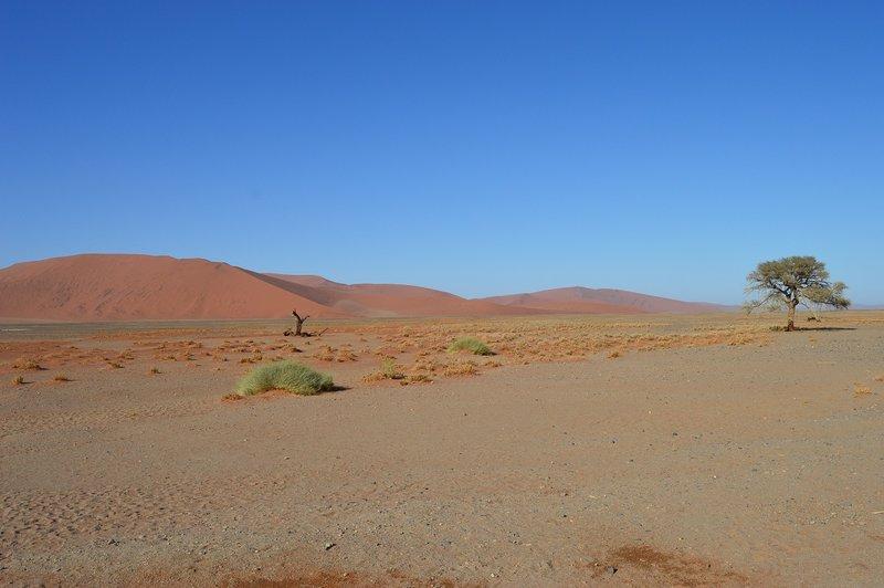 large_Dunes__19_.jpg