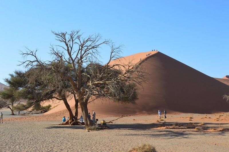large_Dunes__20_.jpg