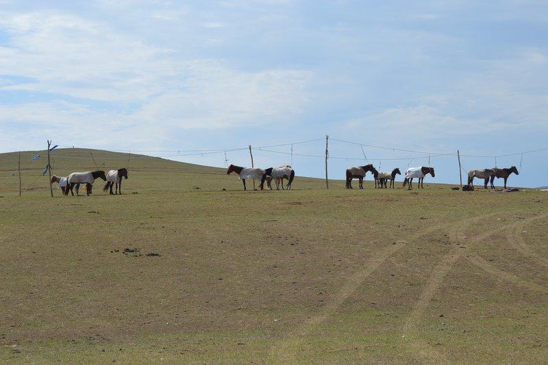 large_Horse_Camp__1_.jpg