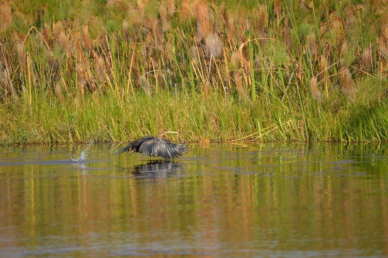 large_Okavango1__5_.jpg