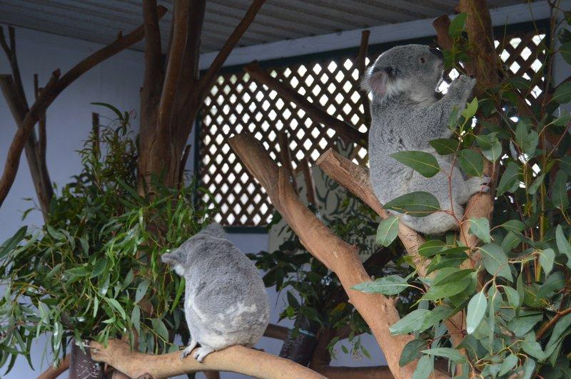 large_Sydney01__7_.jpg