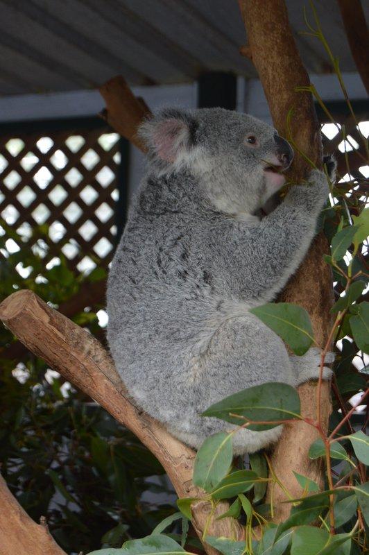 large_Sydney01__9_.jpg