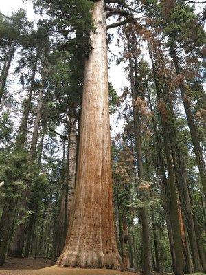 IMG_1234Sequoias