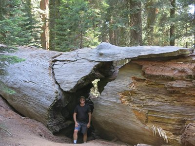 IMG_1198Sequoias