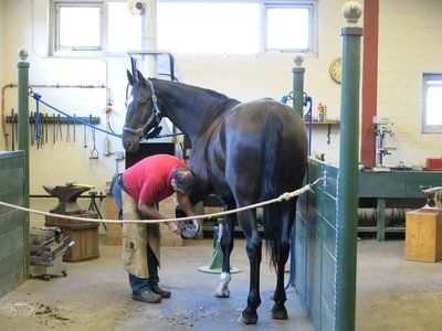 Farrier shoeing on of the horses