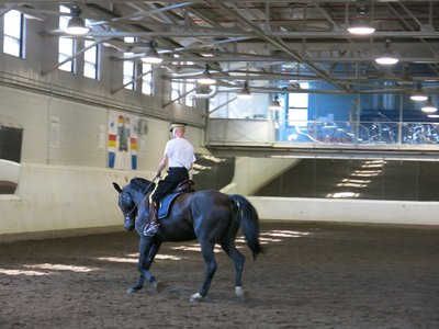 Exercising on of the horses