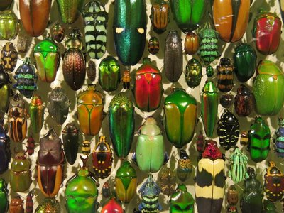 Montreal Botanical Gardens, Beetles in the Insectarium