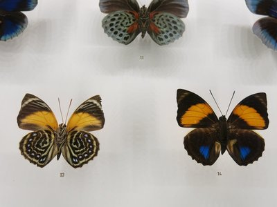 Butterflies in the Insectarium
