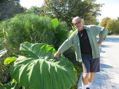 Tim and a giant leaf