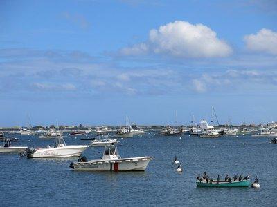 Cormorants in Plymouth Harbor
