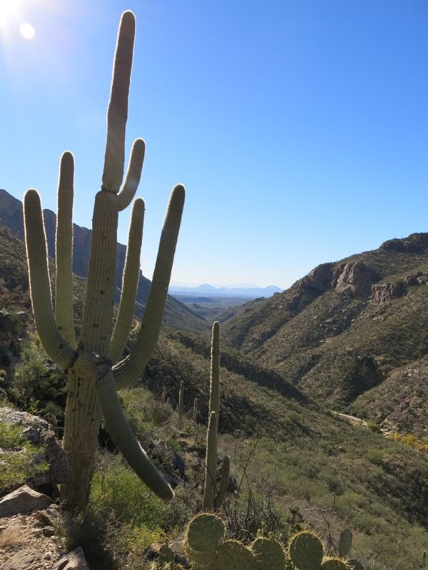 Sabino Canyon in Tucson